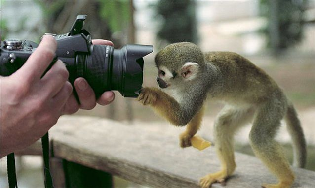 обезьянка проявила интерес