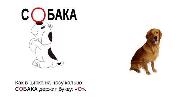 """Правописание слова """"собака"""""""