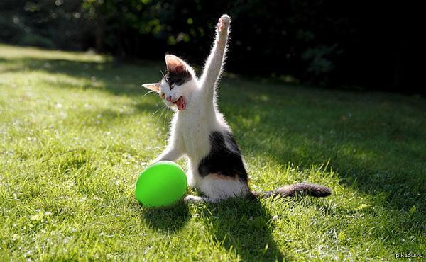 Котенок с воздушным шариком