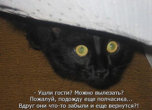 Кот боится вылезать