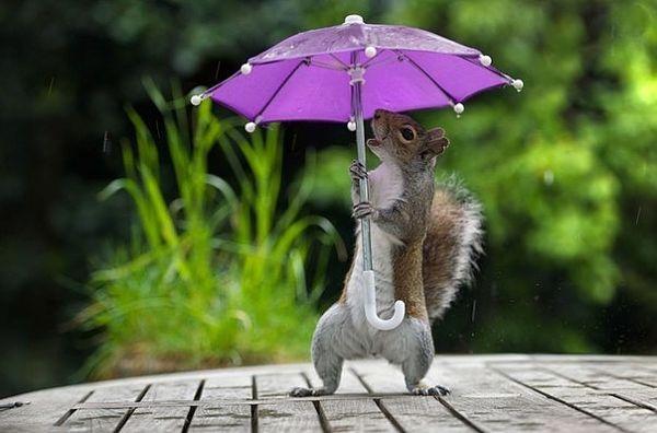 Белка под зонтом