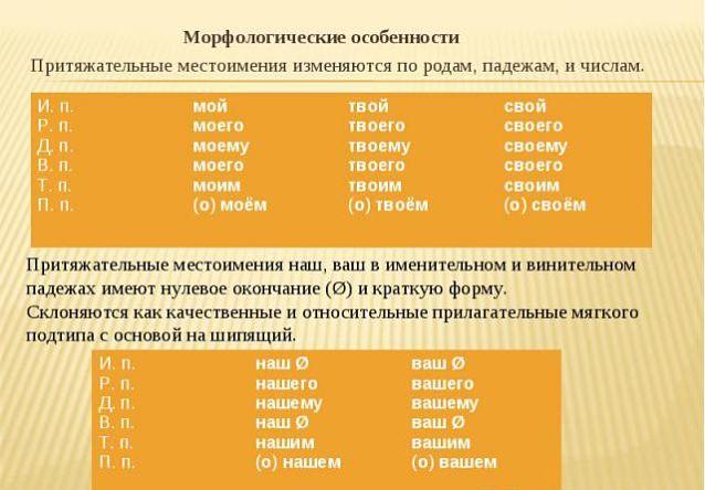 Морфологические особенности притяжательных местоимений