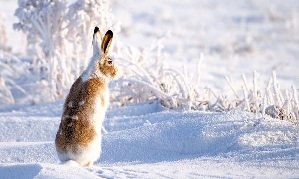Ловкий заяц